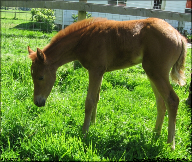 Lovie's Filly