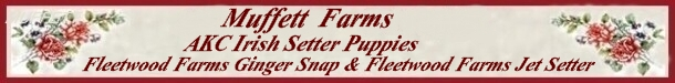 Banner for Irish Setter Puppies