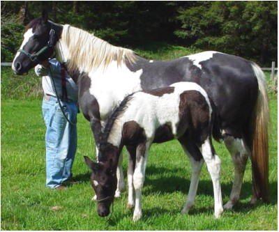 Blizzard with his dam Chancy Jubilee