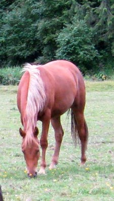 Little Brown 2008 chestnut filly